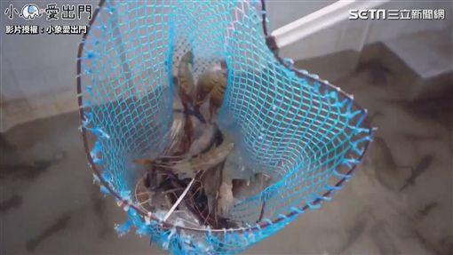 ▲無毒養殖的泰國蝦,Q彈口感讓小象大讚。(圖/小象愛出門 授權)