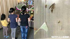 三姊妹失去媽媽、飛蛾/林清良提供、資料照