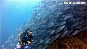 陳耀恩,Ean Chen,Bohol,薄荷島,傑克魚風暴,傑克魚 勿用