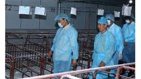 越南農業部門表示,非洲豬瘟疫情續擴大蔓延,全越南共有34個省市淪為疫區,已撲殺約150萬頭豬。面對疫情升溫情況,越南總理阮春福昨19日視察河內市養豬場,要求相關單位加強防疫。(圖/翻攝自vietnamnews)