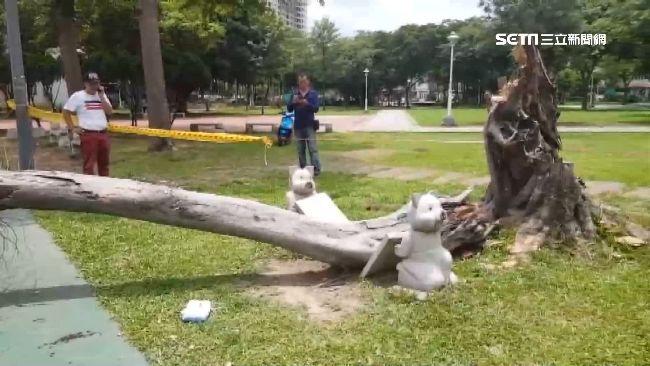 砰!榕樹突傾倒 2高中生打球遭砸傷