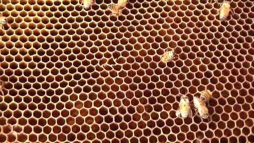 70年最慘! 蜂蜜產量不到1成 蜂蜜評鑑急停