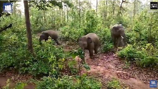 印度,村民拿石塊砸大象(圖/翻攝自Daily Mail YouTube)