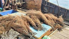 高雄,陸漁船,珊瑚,扣押(圖/翻攝畫面)