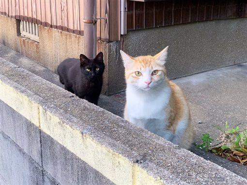 想跟橘貓玩…黑貓肉身橫擋「宣示主權」:他是我的!(圖/翻攝自Twitter@neohimeism)