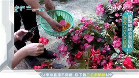 花卉入菜簡單調理 農場轉型嬌客吸睛