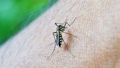 愛滋,蚊子 (圖/取自Pixabay)