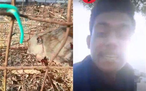 馬來西亞,猴子,槍殺 (圖/翻攝自YouTube)