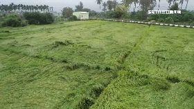 高農損嚴重1200