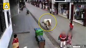 白馬,狂奔,安徽,撞傷,擊斃(翻攝自梨視頻) https://www.pearvideo.com/video_1557271