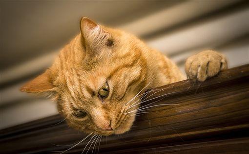 貓咪、貓/翻攝自pixabay