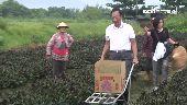 郭台銘訪雲林農民 張麗善讚:接地氣