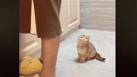 可愛到不行!萌貓主動出擊 飛簷走壁就為跟媽磨臉撒嬌(圖/翻攝自Ben OH臉書)
