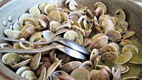 -蛤蜊-蛤蠣-圖/翻攝自Pixabay
