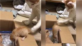 霸氣的母貓推幼貓。(圖/翻攝自Newsflare FB)