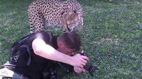 獵豹,非洲,攝影師(圖/翻攝自YouTube)