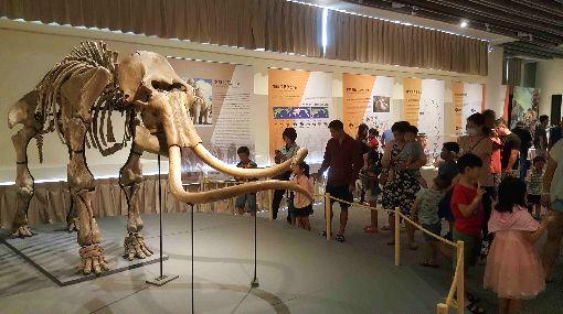 史前巨獸齊聚澎湖 古生物特展登場(2)「史前巨獸-古生物特展」巡迴展25日起在澎湖生活博物館登場,展出台灣目前唯一的完整長毛象原件標本等,吸引大小朋友前往參觀,了解地球生態演化發展史。中央社 108年5月25日