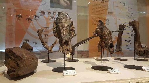 史前巨獸齊聚澎湖 古生物特展登場(1)「史前巨獸-古生物特展」巡迴展25日起移師澎湖生活博物館舉行,集合多種難得一見的古生物化石,並介紹地球的歷史、生態及演化等,歡迎大小朋友把握難得機會前往欣賞。中央社 108年5月25日