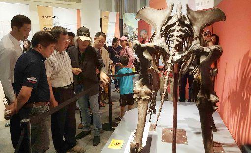 史前巨獸古生物特展澎湖開幕(3)原本只能透過書本看到的劍龍、長毛象等史前巨獸化石,25日起移師澎湖生活博物館展出,吸引大批民眾前往參觀。中央社 108年5月25日