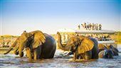 非洲水陸獵遊 賞期間限定動物大遷徙