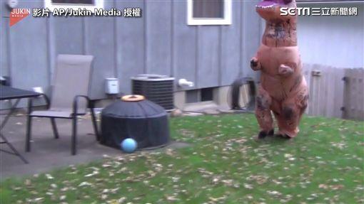 ▲假扮的恐龍跑起來嚇唬狗狗。(圖/AP/Jukin Media 授權)
