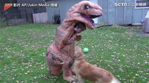 ▲原來恐龍是小主人扮的,狗狗開心地繞著主人轉。(圖/AP/Jukin Media 授權)