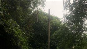 汐止區路樹倒塌壓電線 47戶暫停電(圖/中央社)