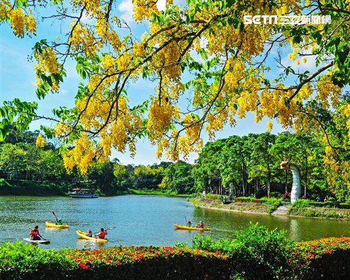 台南市觀光旅遊局,端午連假,白河蓮花,龍舟,阿勃勒,台南市