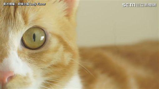 ▲貓咪像玻璃球一樣的晶瑩剔透的眼睛,是貓咪的魅力之一。(圖/好味小姐 授權)