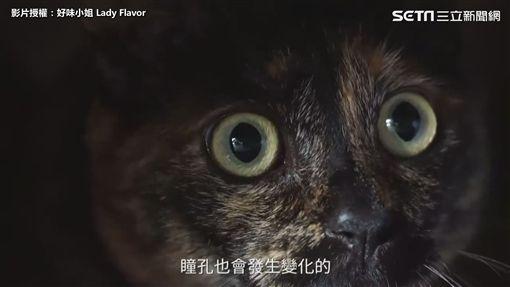 ▲貓咪受到威脅或是感到害怕時,瞳孔會變大。(圖/好味小姐 授權)