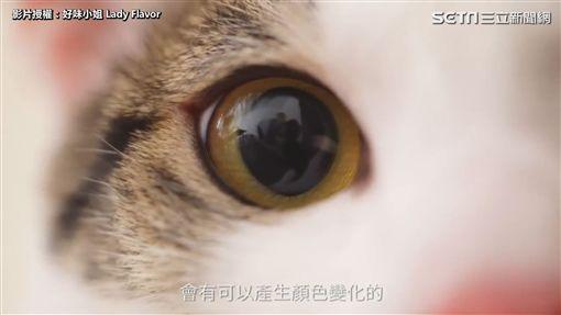 ▲貓咪的眼睛不只看起來漂亮,還藏了許多祕密。(圖/好味小姐 授權)