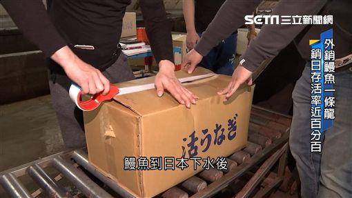 台拚鰻魚外銷!出口「日」年產值26.4億元