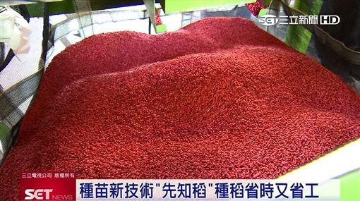 農業創新技術助攻! 讓種稻變得省時省工