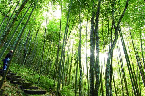 風景聞名的雲林草嶺。(圖/翻攝自交通部觀光局)