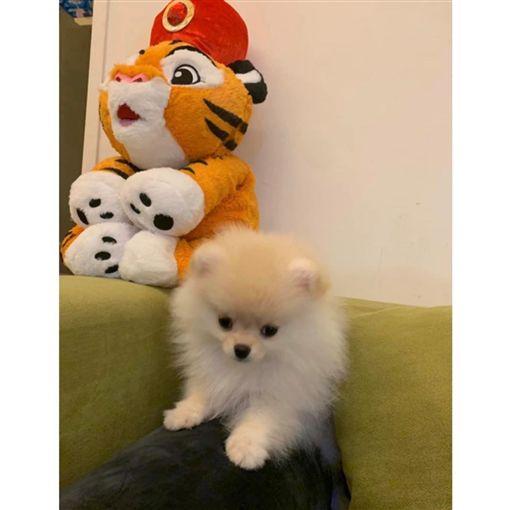熊熊(卓毓彤),狗狗,寵物。(圖/IG)