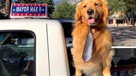 黃金獵犬,狗,鎮長,繼任,美國,南加州,鎮務,兄弟 圖/翻攝自Mayor Max臉書