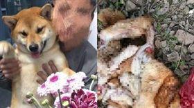 大陸柴犬皮蛋走失遭屠殺肢解。(圖/翻攝自微博)