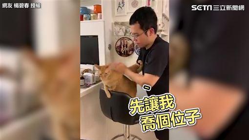 貓咪喬舒服姿勢按摩。(圖/網友楊碧春授權)