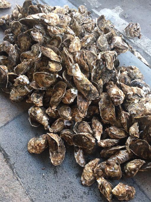 馬祖生蠔進入肥美季 業者搶鮮上市(2)馬祖地區漁民養殖的生蠔開始進入肥美季,已陸續採收上市,業者也開始接受宅配訂單。(連江縣政府提供)中央社 108年6月6日