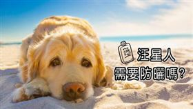 圖/翻攝自Dogtime