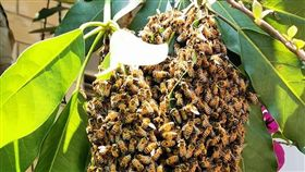 蜜蜂,開店,爆怨公社 圖/翻攝自臉書爆怨公社