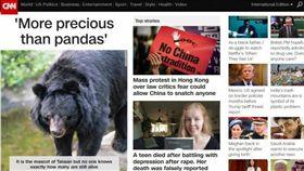 「比熊貓還珍貴!」CNN頭條 深度報導台灣黑熊 圖/翻攝自CNN