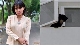 馬來西亞,馬來熊,歌手,開齋節,收養,收傷,照顧,狗,飢餓,保育,動物,熊 圖/翻攝自臉書