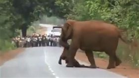 大象叼著死去的小象。(圖/翻攝自ParveenKaswan 推特)