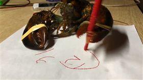 龍蝦,寫字,數字,明牌,爆廢公社公開版 圖/翻攝自臉書爆廢公社公開版