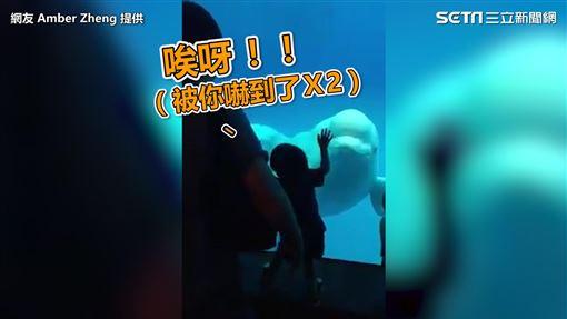 小男孩做出被嚇到的反應與小白鯨互動。(圖/網友Amber Zheng授權)