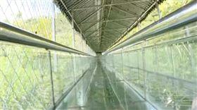 101公尺超長玻璃溜滑梯!他們慘遭「極速噴飛」1死6傷(圖/翻攝自新浪網)