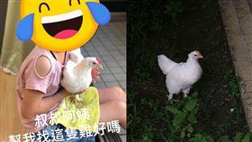 「叔叔阿姨,幫我找這隻雞好嗎」一名網友在臉書社團「基隆人」上PO出這張尋「雞」啟示,照片中可以看到一個小女孩腿上抱著一隻雞,PO的網友表示,因為家中的寵物雞失蹤了,因此發文求助,想請大家幫忙「尋雞」!(圖/翻攝自臉書社團基隆人)