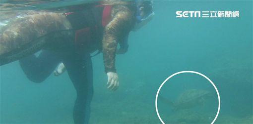 小琉球,海龜,綠蠵龜,保育,海巡,現行犯