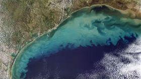 墨西哥灣「死亡區」面積激增 衝擊海洋生物…游不走只能等死!(圖/翻攝自TomoNews 台灣YouTube)